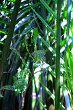 Feuchte Bäume des Waldes des Palmenwaldgrüns lizenzfreies stockbild