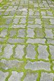 Feuchter Gehweg mit Moos. Stockbild