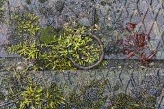 Feuchtes Moos und Blätter Lizenzfreies Stockbild