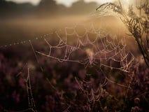 Feuchtes Spinnennetz auf dunstigem Sommermorgen Lizenzfreies Stockfoto