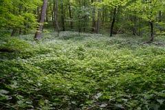 Feuchtgebiet im Hartholz-Wald Lizenzfreie Stockfotos
