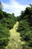 Feuchtgebiete am Sommer Lizenzfreie Stockbilder