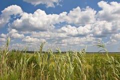 Feuchtgebiete und Schilfe Lizenzfreies Stockfoto