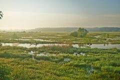 Feuchtwiesen nach dem Wintertauwetter Stockbilder