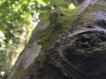 Feuer-Ameisen lizenzfreie stockfotos