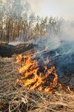 Feuer auf Ackerland nahe Wald Lizenzfreie Stockbilder