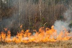 Feuer auf Ackerland nahe Wald Lizenzfreie Stockfotos