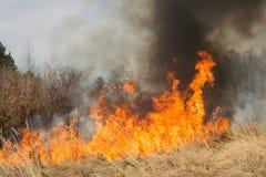 Feuer auf Ackerland nahe Wald Stockfoto