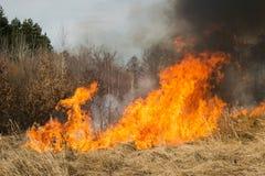 Feuer auf Ackerland nahe Wald Lizenzfreies Stockbild