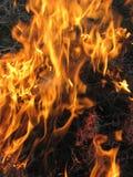 Feuer auf dem Gebiet Stockbilder