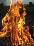 Feuer auf dem Gebiet Stockfotos