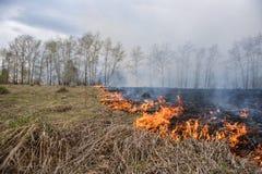 Feuer auf dem Gebiet Lizenzfreies Stockfoto