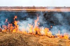 Feuer auf der Natur Stockbild