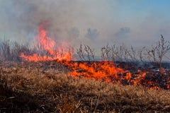 Feuer auf einem trockenen Feld Lizenzfreie Stockbilder