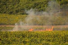 Feuer auf Feld Lizenzfreie Stockbilder