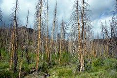 Feuer beendete Bäume stockfotografie