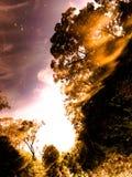 Feuer! brennen Sie Natur in der Dschungelunschärfe und reflektieren Sie sich Stockbild