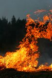 Feuer. Brennendes Gras im Frühjahr Stockfoto