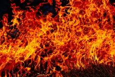 Feuer. Brennendes Gras im Frühjahr Lizenzfreies Stockbild