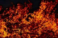Feuer. Brennendes Gras im Frühjahr Lizenzfreie Stockfotografie
