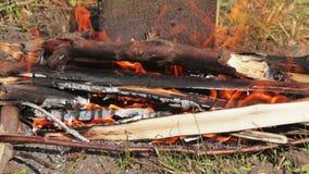 Feuer brennt in der Natur stock video footage