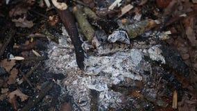 Feuer, das trockene Blätter brennt stock video footage