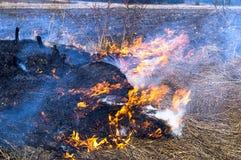Feuer, das trockenes Gras brennt Lizenzfreie Stockfotos