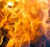 Feuer in der Natur Stockbilder