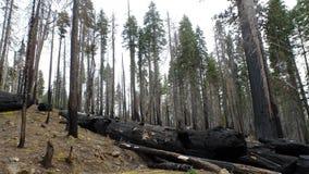Feuer in der Waldung lizenzfreies stockbild
