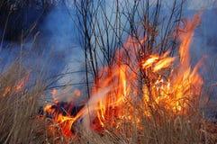 Feuer des Grases lizenzfreie stockbilder