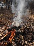Feuer im Herbstwald Stockbild