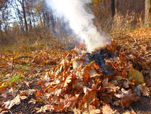 Feuer im Herbstwald Stockfotografie