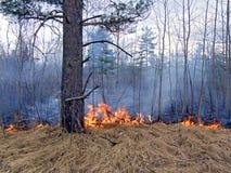 Feuer im Holz Lizenzfreie Stockfotografie