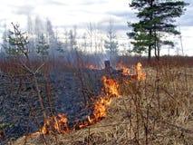 Feuer im Holz Lizenzfreie Stockfotos