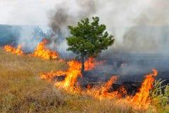 Feuer im Holz an einem heißen Sommertag. Stockfoto