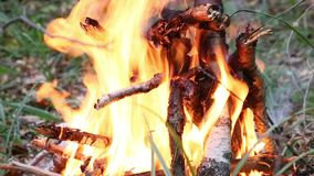 Feuer im Wald stock footage