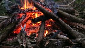 Feuer im Wald stock video
