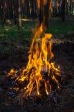 Feuer im Wald Stockbild