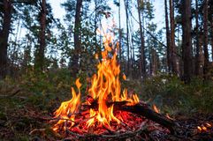 Feuer im Wald Lizenzfreie Stockfotos