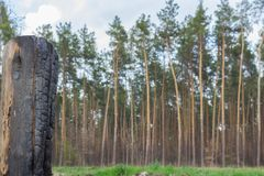 Feuer im Wald als Umweltkatastrophe lizenzfreies stockfoto