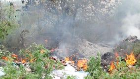 Feuer im Wald, in den brennenden Bäumen und im Gras stock video