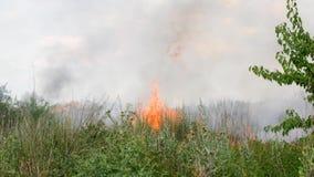 Feuer im Wald, in den brennenden Bäumen und im Gras stock footage