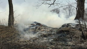 Feuer im Wald mit einem starken Rauche stock video