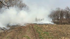 Feuer im Wald mit einem starken Rauche stock video footage