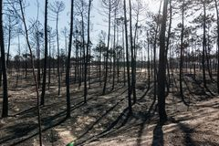 Feuer in Portugal Stockfoto