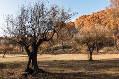 Feuer in Portugal, Alcabideque-Feuer Lizenzfreies Stockbild