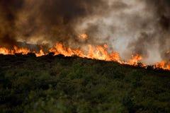 Feuer u. Abholzung stockbild