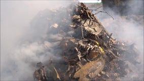 Feuer und Rauch auf Garten stock video