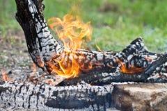Feuerbrände Lizenzfreies Stockbild