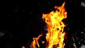 Feuerbrand nachts Nahaufnahme Langsame Bewegung stock video footage